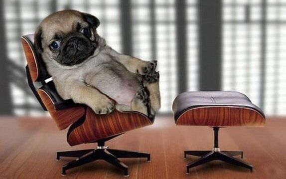 /wp-content/uploads/2016/06/office-pug1-1.jpg
